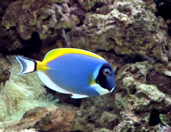 Reef.ro - Galerie - pesti marini si de recif
